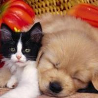宠物领养送养