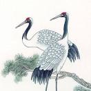 中华鸟类图鉴